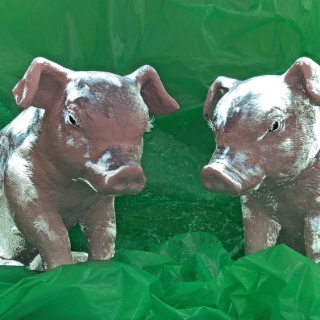 Twin Pigs Haste and Tangle