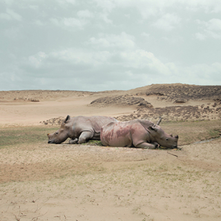 Zhao Renhui, Robert - Rhinoceros with no horns